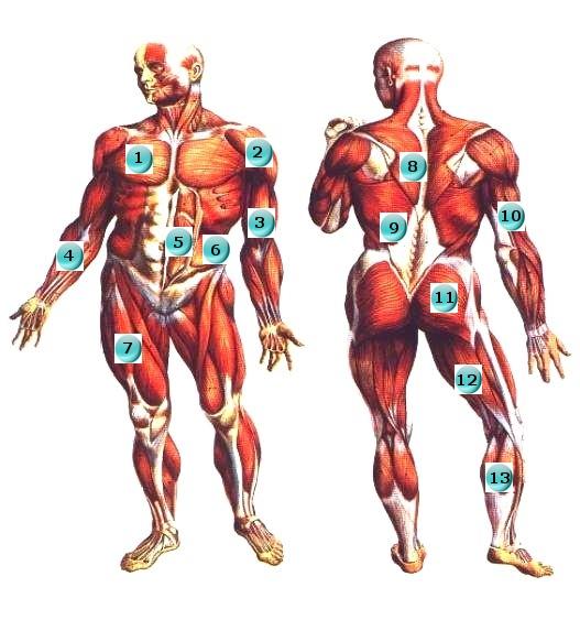 anatomy_2_1.jpg