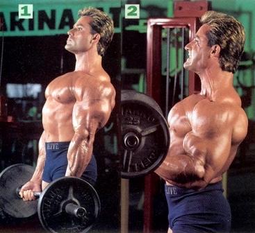 biceps 01.jpg