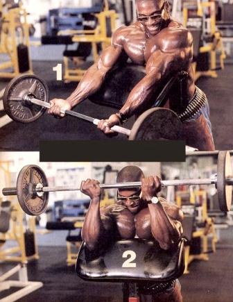 biceps 05.jpg