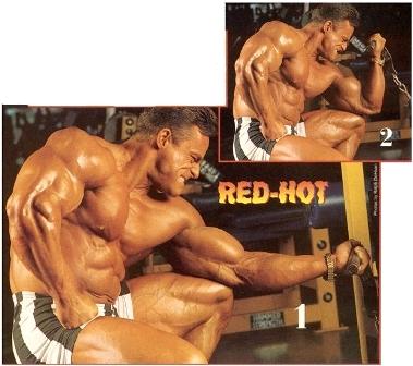 biceps 07.jpg