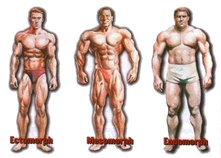 bodytypes7vq9xl.jpg