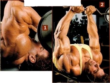 triceps 02.jpg