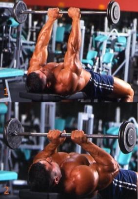 triceps 06.jpg